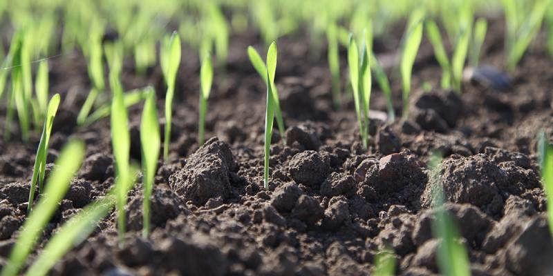 Soil And Crops Trivia Quiz