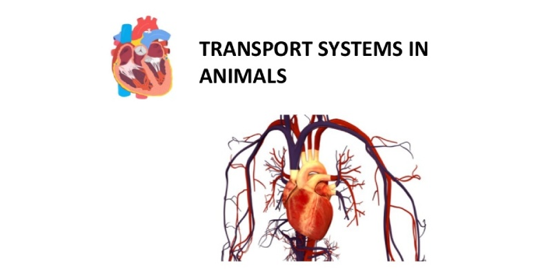 Transportation In Animals Quiz Question And Answer For 7th Grade Students
