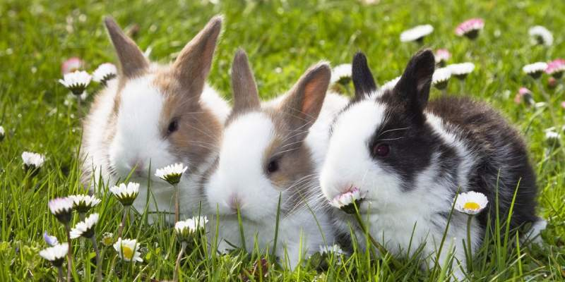 Bunny Breed Quiz: Which Bunny Breed Are You?