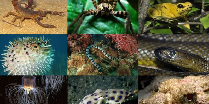 Venomous Animals Trivia Quiz! Can You Pass Venomous Animals Quiz Test