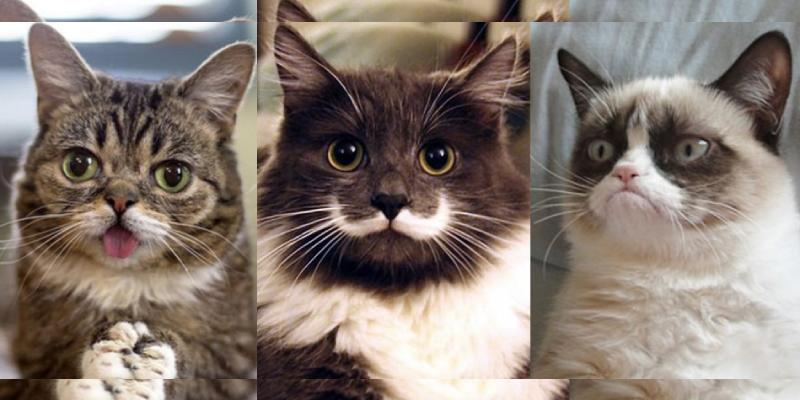 Which Famous Internet Cat Matches Your Personality Quiz