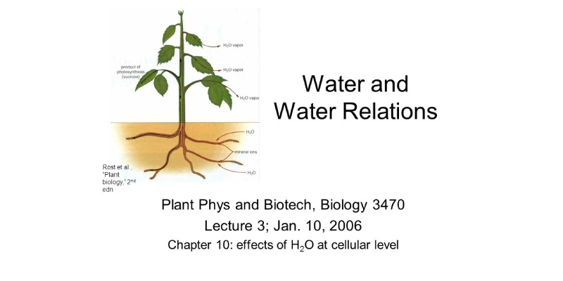 Plant Water Relations Trivia Quiz! Test Your Knowledge About Plant Water Relations Quiz