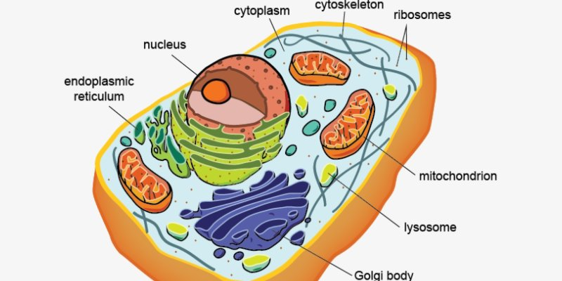 Trivia Quiz About Cell! Take This Ultimate Quiz About Cell
