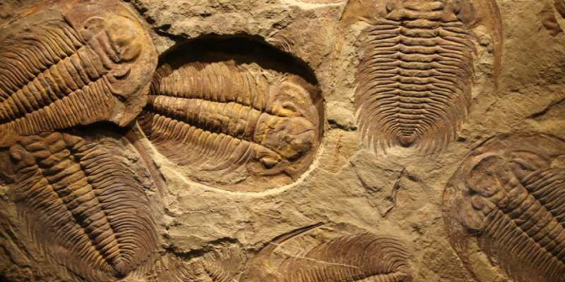 Ultimate Trivia Quiz On Fossils