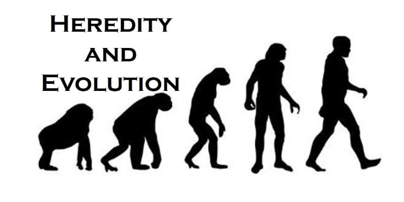 Heredity And Evolution Quiz: How Much You Know About Heredity And Evolution?
