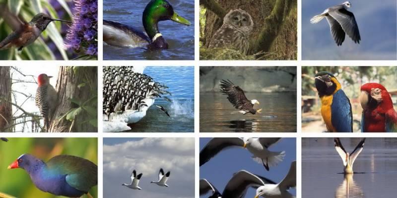 What Type Of Bird Should I Get Quiz