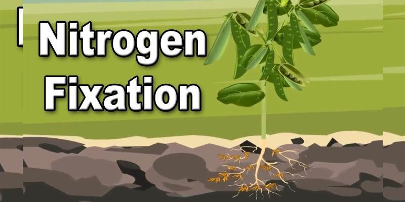 Nitrogen Fixation Trivia Quiz