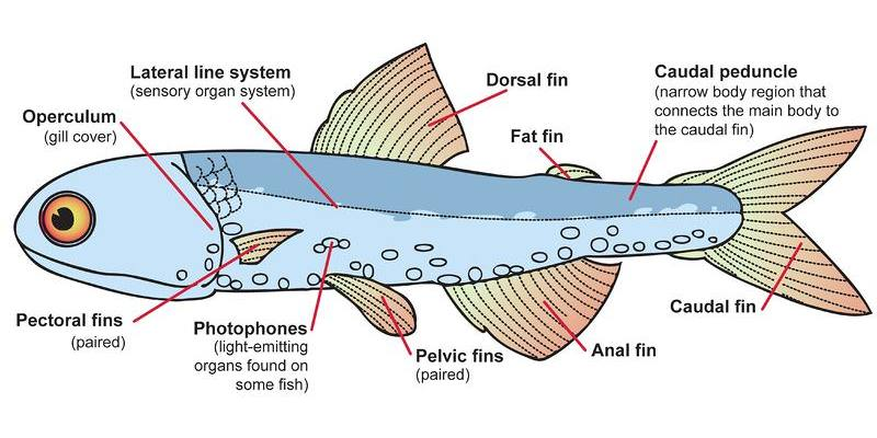 The Special Features of The Fishes Quiz: Do You Know About the Special Features of Fishes?