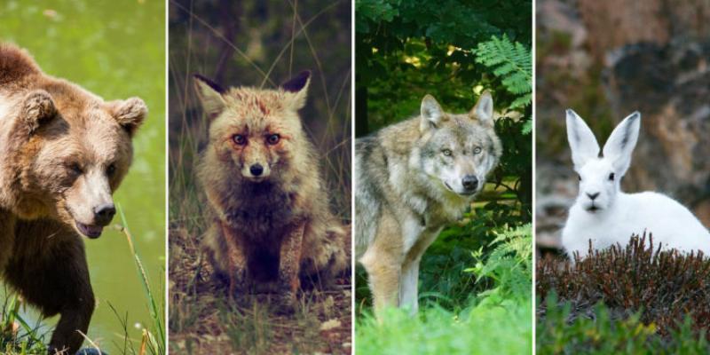 Spirit Animal Test: What Is Your Spirit Animal Quiz
