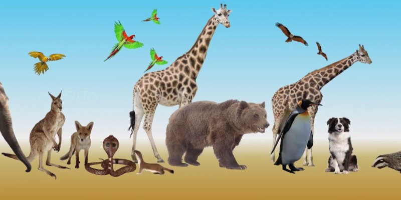 Adaptations of Terrestrial Organisms Trivia Quiz