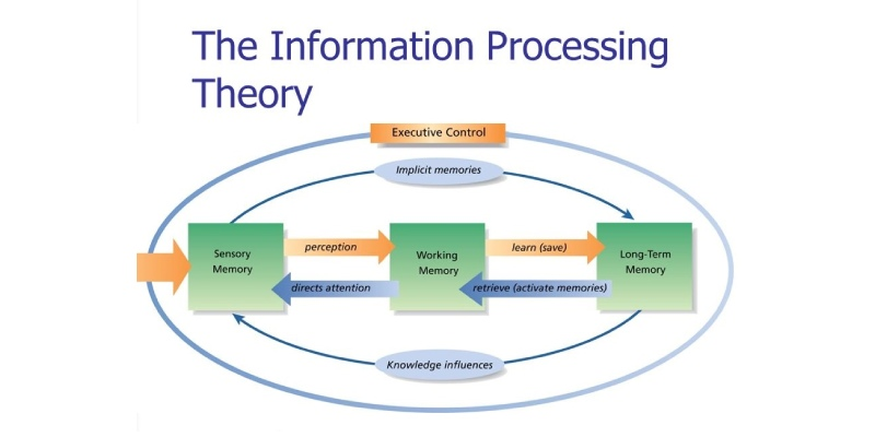 Ultimate Trivia Quiz About Information Processing Theory