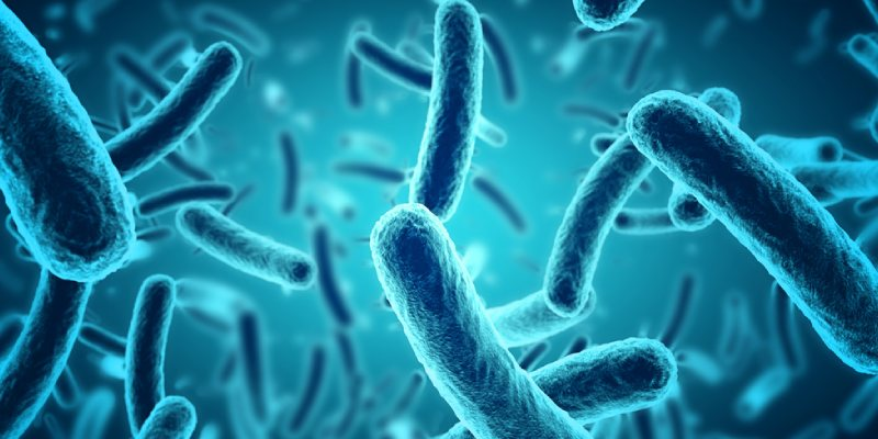 Microbes And The Human Body Trivia Quiz! How Much You Know About Microbes And The Human Body?