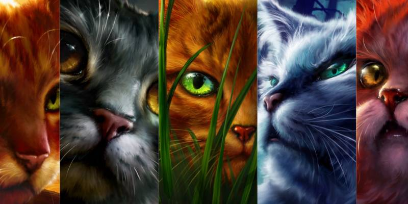 Warrior Cats Quiz: What Is My Warrior Name?