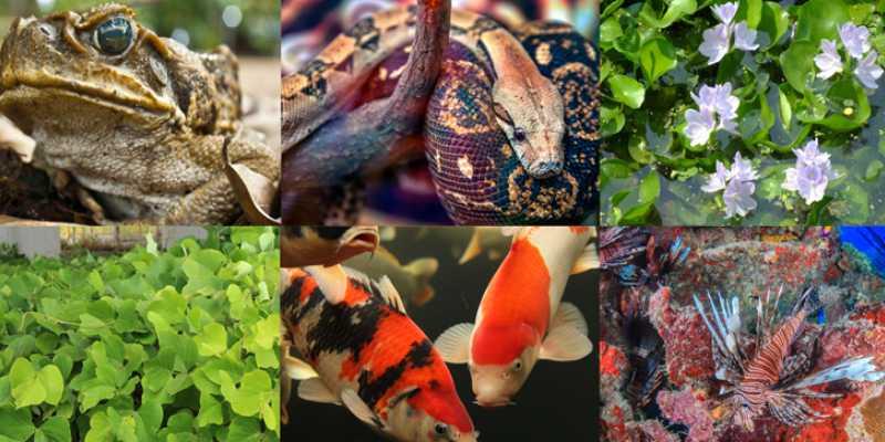 Invasive Species And Ecology Trivia Quiz