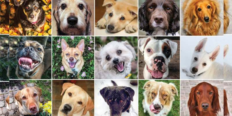 Quiz: What Kind Of Dog Are You?