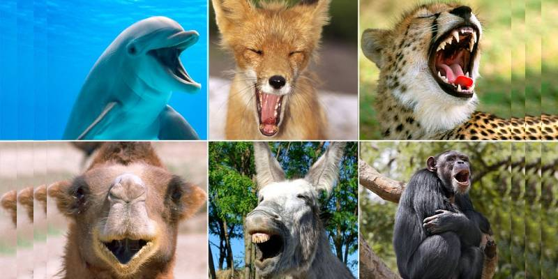 Quiz: What Laughing Animal Are You?