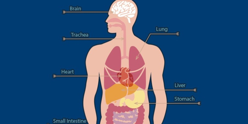 Quiz: What Do You Know About Human Body?
