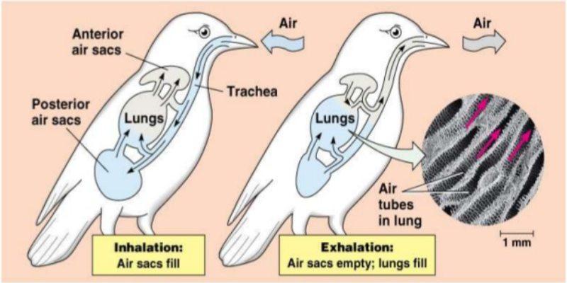 Aerial Volant Adaptations Trivia Quiz