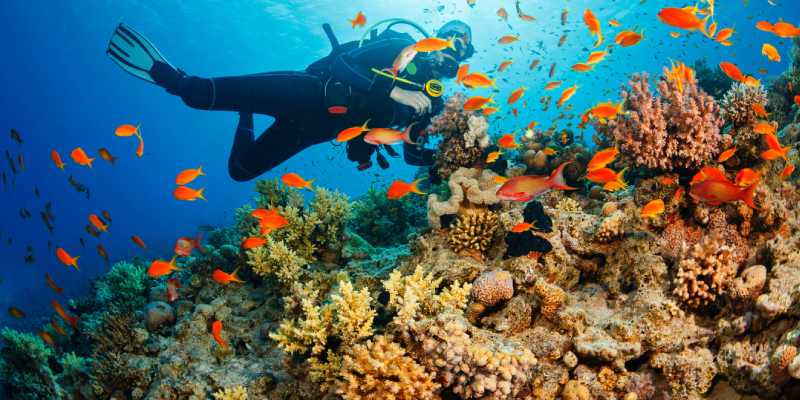 Ultimate Trivia Quiz On News of Relief For Coral Reef