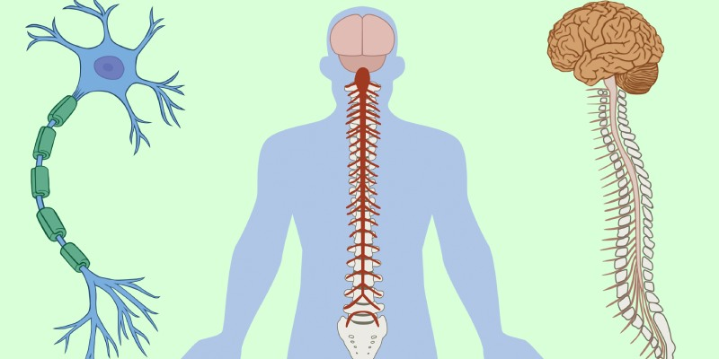 Quiz: How Much You Know About Nervous system?