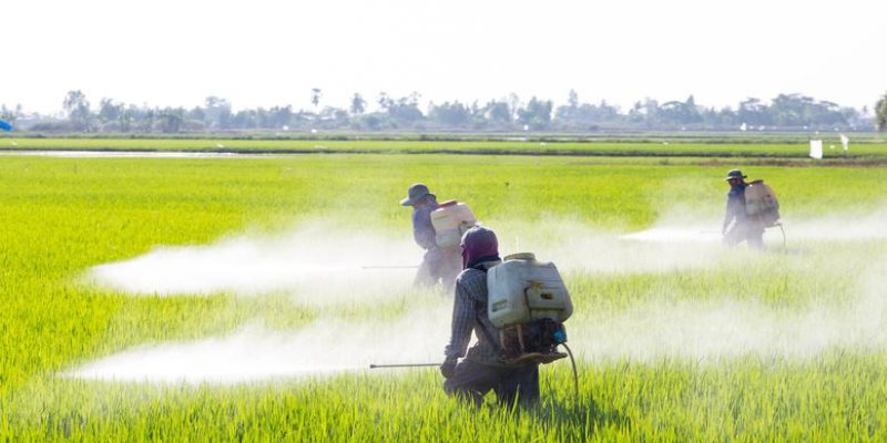 Pollution Due To Fertilizers Quiz Question and Answer