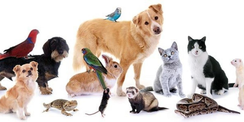 Quiz: Which Pet Is Best For You?