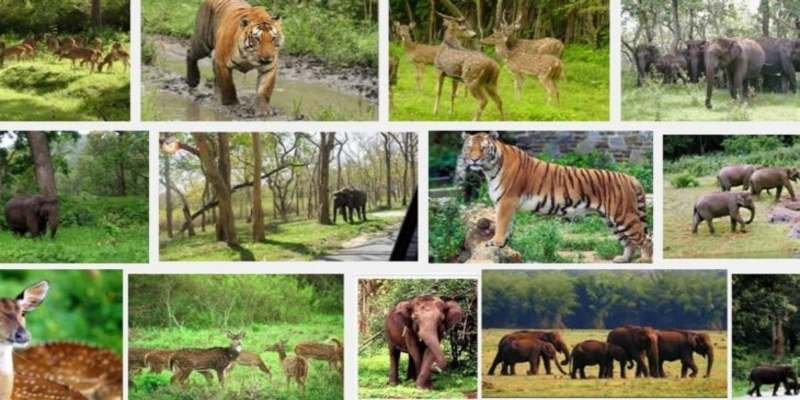 Indian Climate, Vegetation and Wildlife Quiz