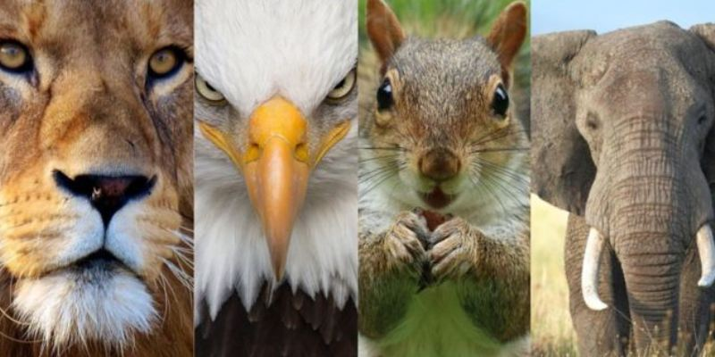 Which Animal Matches Your Personality Best Quiz