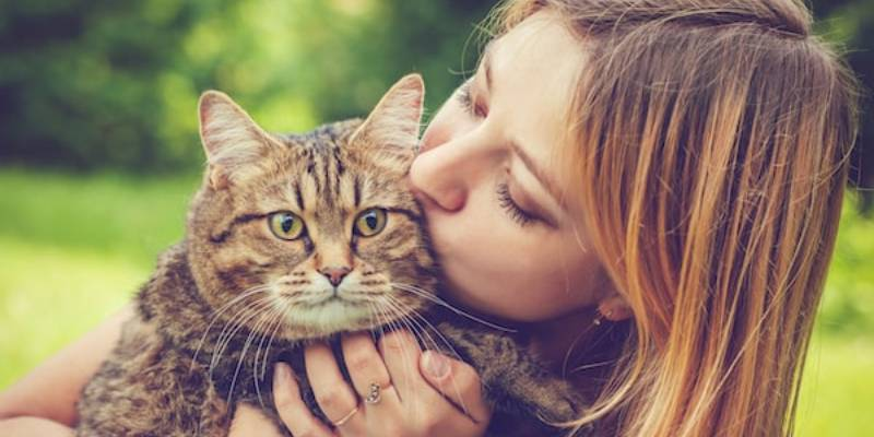 How To Tell If Your Cat Loves You Quiz