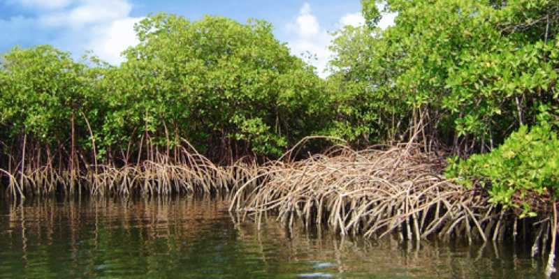 Ramsar Convention Quiz: How Much You Know About Ramsar Convention?
