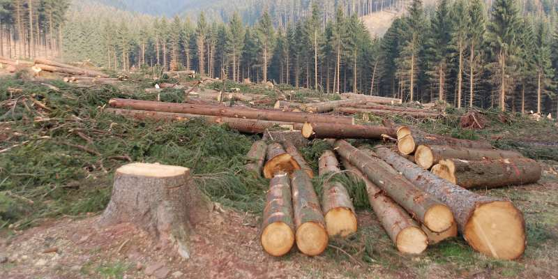 Deforestation Quiz: How Much You Know About Deforestation?