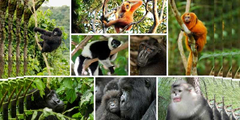 Quiz: Which Primate Are You Most Like?