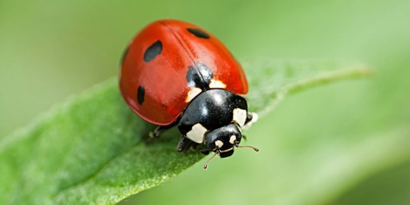Bug Quiz: How Much You Know About Bugs?