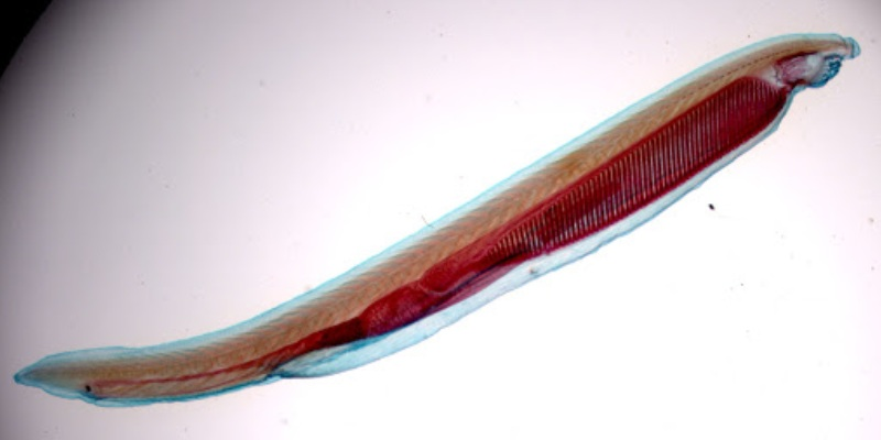 Quiz: How Much You Know About Amphioxus?