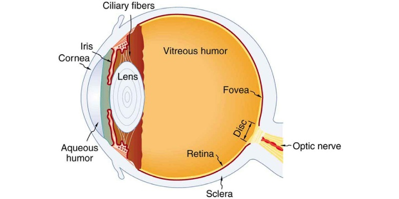 Trivia Quiz On Anatomy Of Human Eye