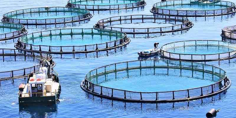 Ultimate Aquaculture Trivia Quiz