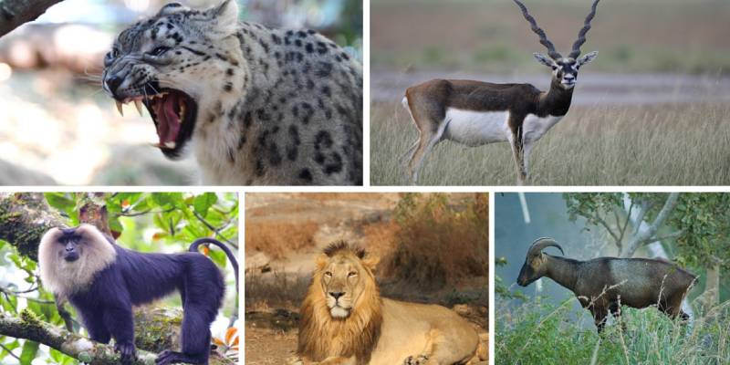 Ultimate Trivia Quiz on Wildlife