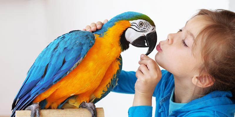How Much Do You Truly Love Birds Quiz