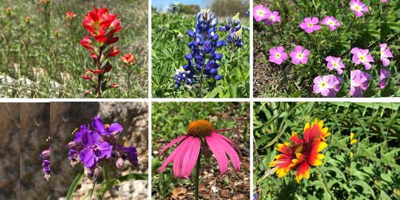 Flower Quiz: Which Kind Of Flower Am I?