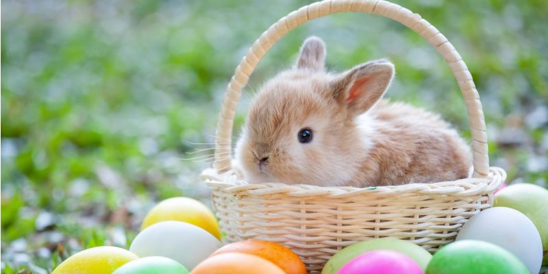 Bunny Quiz: How Much You Know About Bunny?