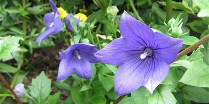 Flowering Plants Quiz: How Much You Know About Flowering Plants?