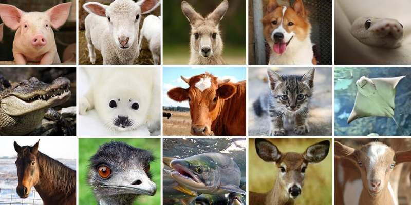 What Animal Am I Quiz