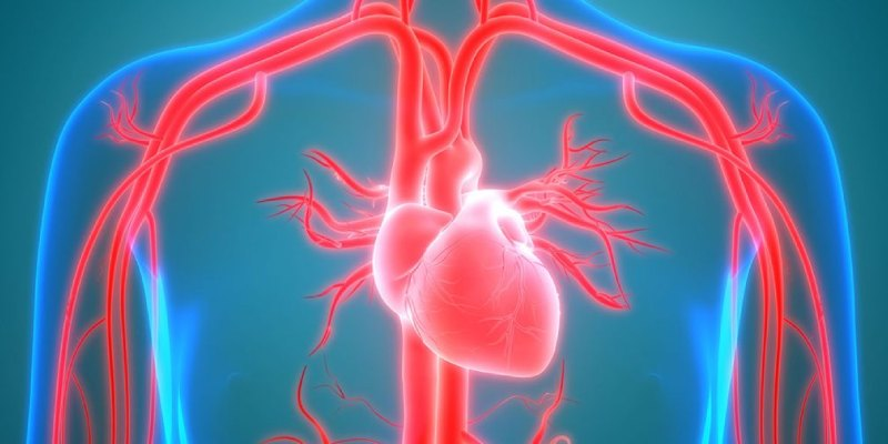 Cardiovascular System Quiz: How Much You Know About Cardiovascular System?