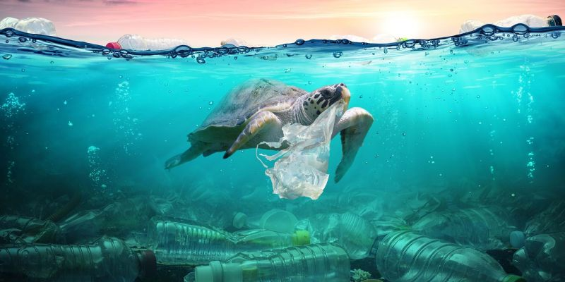 Plastic In The Ocean Quiz: How Much You Know About Plastic in the Ocean?