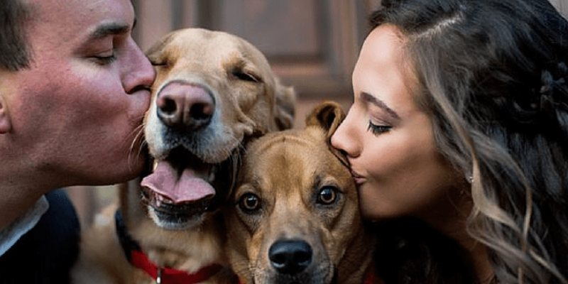 Quiz: How Much Of A Dog Person Are You?