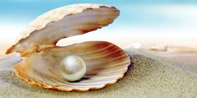 Mollusc Industry or Pearl Culture in India Trivia Quiz! Let
