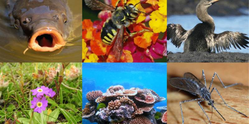 Quiz: How Much You Know About The Characteristics Of Living Organisms?