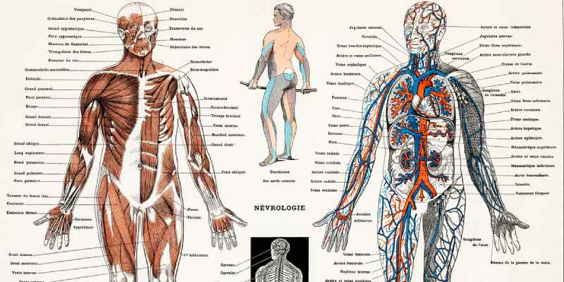 Trivia Quiz On Human Nervous System