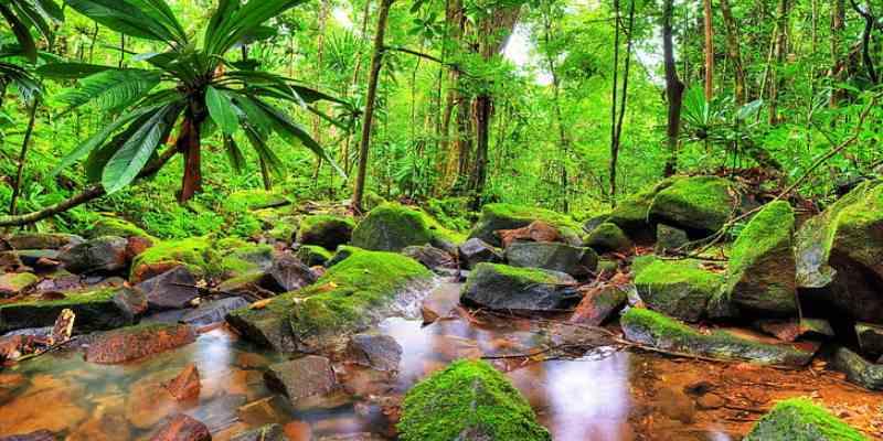 Adaptation In The Tropical Region Trivia Quiz