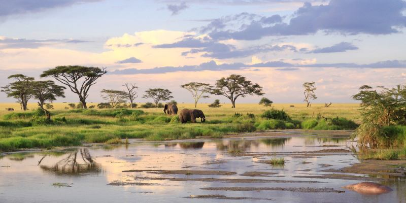 Quiz: How Much Do You Know About The Serengeti?